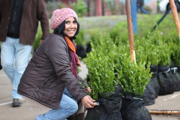 Forestal mininco y cmpc realizan primera entrega de for Viveros en curico