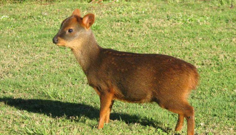 Aumentan especies amenazadas en la Región del Maule tras incendios forestales