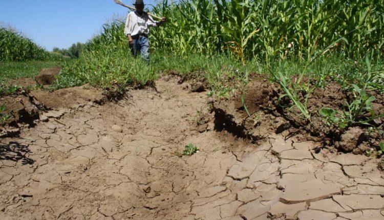Temporada de riego se verá afectada por déficit hídrico en el Maule