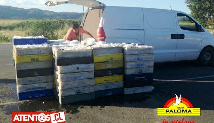 Carabineros decomisó más de 2 toneladas de merluza en Talca