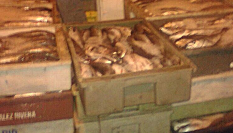 Carabineros de Talca decomisó más de 1800 kilos de pescado ilegal